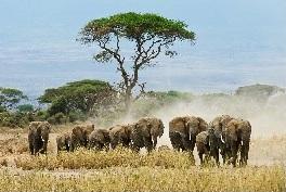 Flyer Tanzania